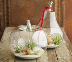 All these need are air!  I wonder if my cat will eat this.. Air Plant Terrariums