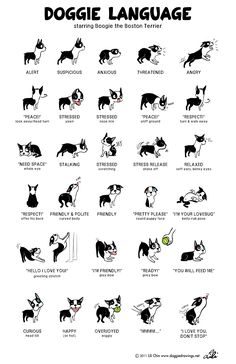 Doggie language--do you know what your dog is saying? #infografía