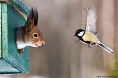 funny animals, talking animals, houses, critter, funny animal pics, squirrels, homes, birds, friend