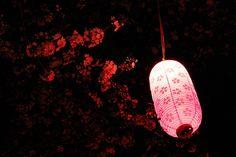 #Pink #lantern || #Asia for #kids