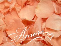Amazon.com: Wedding Freeze Dried Rose Petals PEACH SALMON 2.0 Oz / 56 grams 200 Petals: Everything Else $16.99