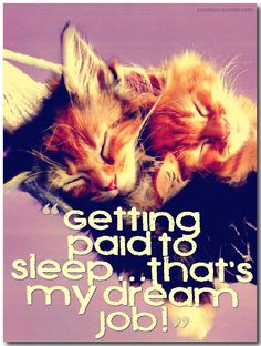 Getting paid to sleep…That's my dream job | Funny quotes