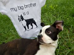 Show off both of your babies at once! This is a great gift for any dog lover, Boston Terrier owner, or dog themed baby shower. Since it's gender neutral it can easily be worn by a baby girl or baby boy.If you're unsure about what size to choose, i...