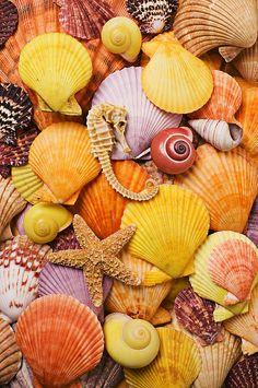 sea horse starfish and seashells