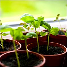 Learn how to grow herbs that are nice to your skin. They're a money saver AND a skin saver!
