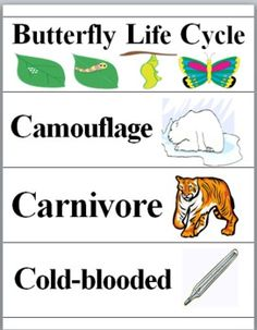Animals Science Word Wall Cards