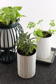 Can Herb Garden | Flickr - Photo Sharing!
