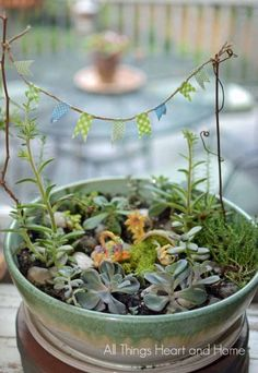Easy Succulent Fairy Garden- fun summer project! #decoratingwithplants #succulents