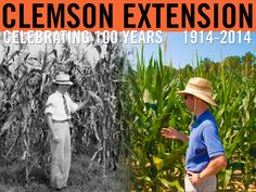 Left: Image from 1941 agronomy report for Darlington County. Right: Francis Reay-Jones at the Pee Dee Research & Education Center in Florence County in 2010. #ClemsonExt100