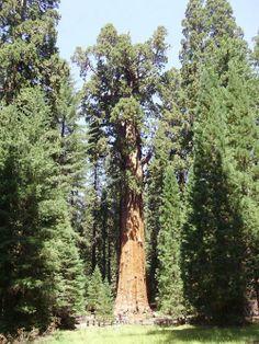 General Sherman, California, http://bit.ly/1bXYFQr