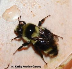 Can a Bee Unscrew the Sting?
