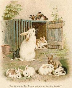 Birds talk to bunnies