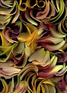 Hemerocallis by Horticultural art