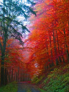 Gorgeous!!! fall leaves, season, color, road trips, fall autumn, forest, fall trees, place, dirt roads