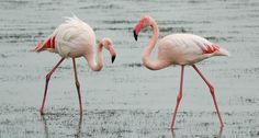 two flamingos ~~ Al S/Flickr (CC BY-NC-SA 2.0)