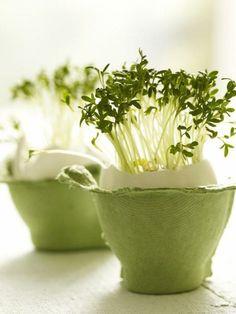 seedlings  via Kate Darlington