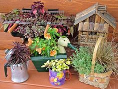 Stunning Low-Budget Container Gardens : Outdoors : Home & Garden Television
