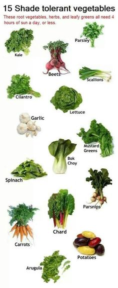 Shade tolerant root vegetables