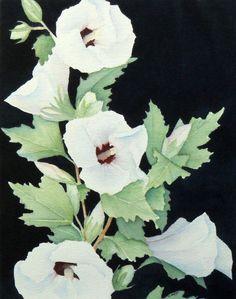 white rose of sharon