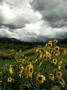 Alpine AZ