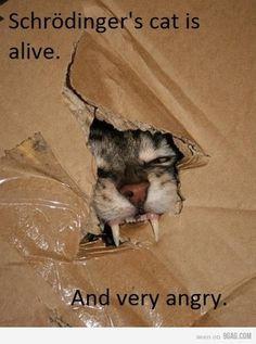 geek, cats, science jokes, nerd jokes, funni, box, bangs, kitty, schroding cat