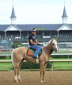 Here's another shot of Regalo Del Oro showing off his beautiful palomino color