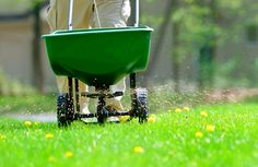 #Gardening Why I don't Winterize My Lawn