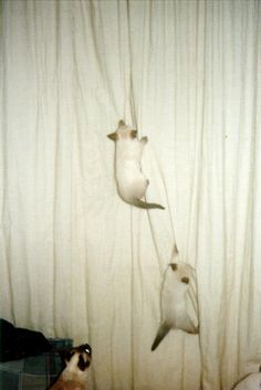 meow curtains