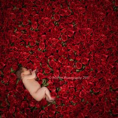 Alice on a Bed of Roses