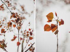 favorit color, season, autumn leaves, fall sunset