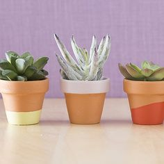 Learn how to paint cute pots to use for succulents! Tips for getting a hand dipped look easily and consistently. These make great gifts!