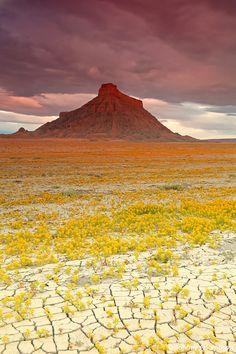 Utah Wild Flowers