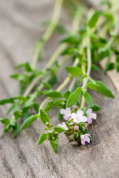5 Essential Herbs to Fend off Cold & Flu: Organic Gardening