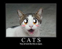 cats, animals, japanes cat, funni, demotivational posters, manga, quot, anime, friend
