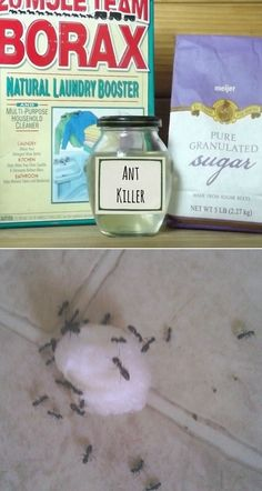 DIY Ant Killer: This Really Works!!All you need is a cup of warm water, 1/2 cup sugar, and 2 tablespoons of Borax. Just mix the ingredients together until dissolved, soak a cotton ball with the solution, and place in the line of ants. It totally works!!