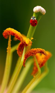 Meet me in the middle - by Red N Spots, via Flickr