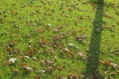 #Gardening Question of the Week — Why Are Tree Leaves Dropping So Early?