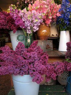 Scarlet & Violet florists , London