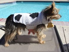 XS Cow Outfit by comodoknitwear on Etsy, $30.00 dog cloth, costum, xs cow, cow outfits, cow obsess