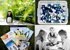 penguin unit study homeschool | lifeinmotionphotography.com