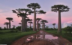 Madagascar I wana go here!