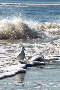 'Surf's up'