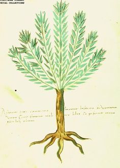 Or I could just get a rosemary tree tattoo and be done with it. Trees are the best.