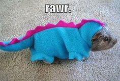 @Ashley Walters Garback Here's a costume for your guinea pig...hee hee