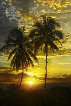 ~~Tropical Sunset by Ringgo Gomez~~