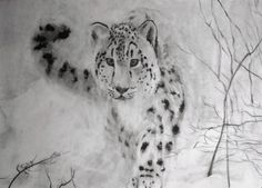 (SOLD) #43 Snow Leopard: Click here to find out a little more about this charity fundraiser art series and how to purchase this original drawing for just