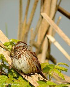Arcata Marsh | Flickr Bird, Beauty, Nature. https://www.facebook.com/JamesAndMelissaPhotography