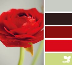 petalled red