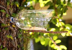 Ramblings From Utopia: DIY Earth Day Project: soda bottle bird feeder
