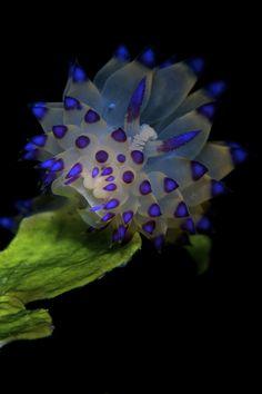 Underwater Photographer David Henshaws Gallery: Contest Entries: Empowered in Purple - DivePhotoGuide.com